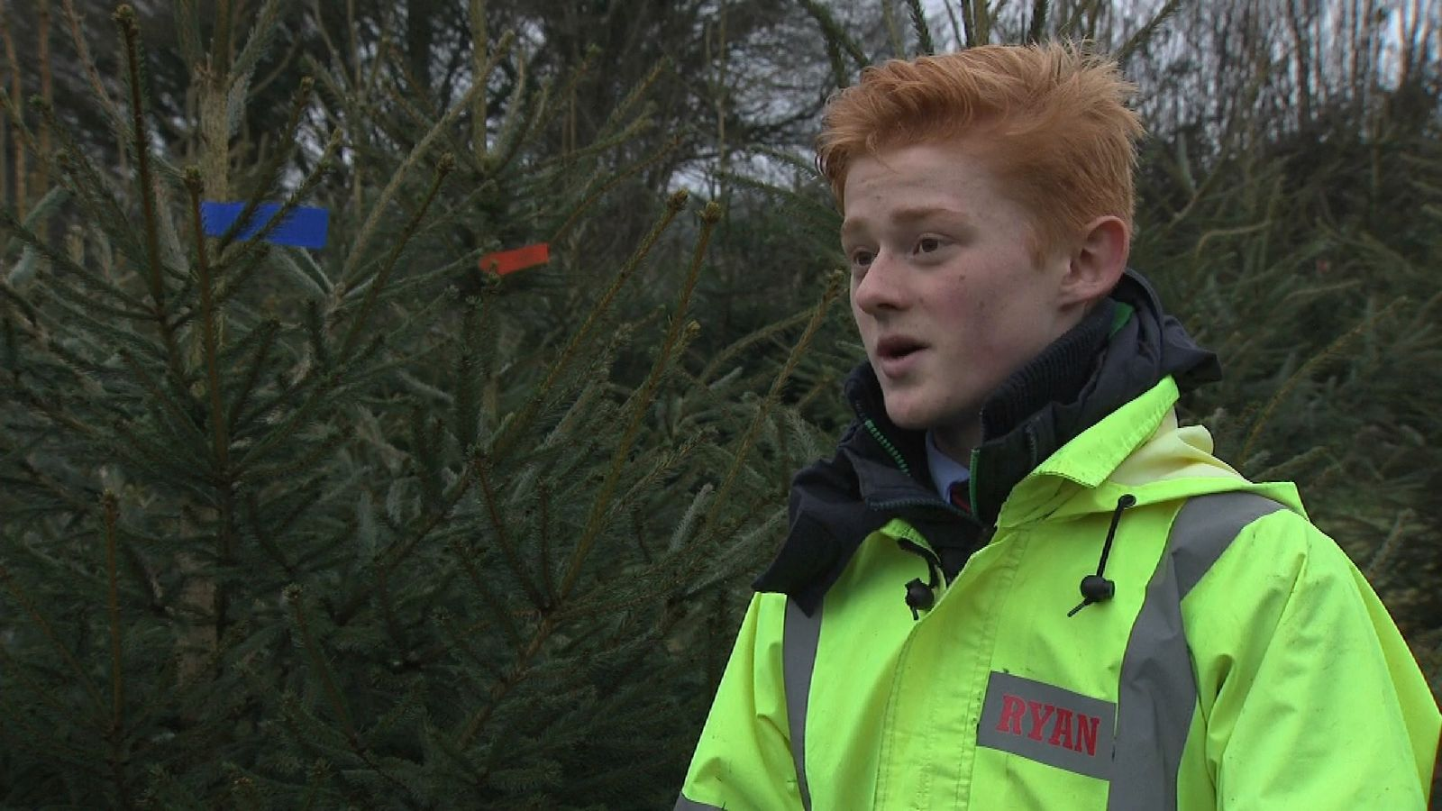 Ryan Brook is selling Christmas trees from his back garden