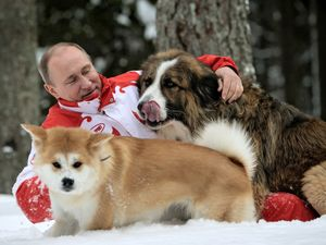Putin shows no puppy love for Japan's attempt at dog diplomacy