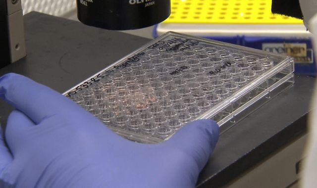 Cancer drugs 'prompt ovaries to produce eggs'