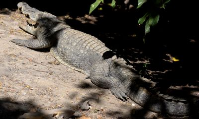Man killed by crocodile as he attempted to cross river in Australia