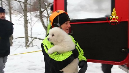One of the puppies rescued from the Italian hotel