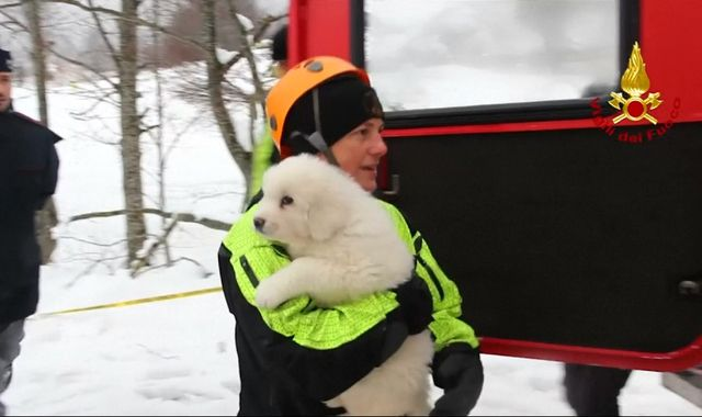 Puppies found alive at Italy avalanche hotel