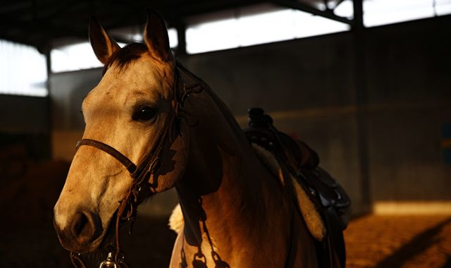 More people killed by horses than snakes in Australia, says study