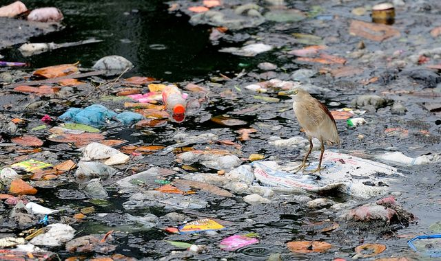 UN takes aim at 'wasteful' plastics in world's oceans