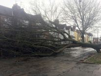 A tree which has fallen onto a house in Bilston Road in Aigburth, Liverpool, as Storm Doris battered swathes of the country