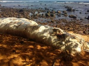 Unidentified sea creature washes up on Philippines beach