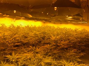 'Enormous' £1m cannabis haul found in raid on 1980s nuclear bunker