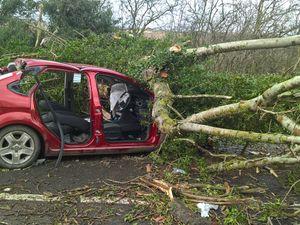 Storm Doris: Pensioner dies three days after tree fell on car