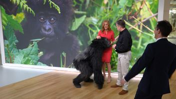 Part-animatronic gorilla is used to highlight the threat to the species