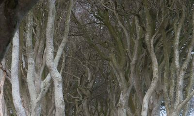 Game of Thrones' Dark Hedges tree destroyed by Storm Doris
