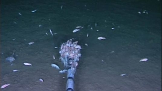 Traces of pollutants are found in world's deepest ocean life