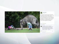 Perth zoo elephant