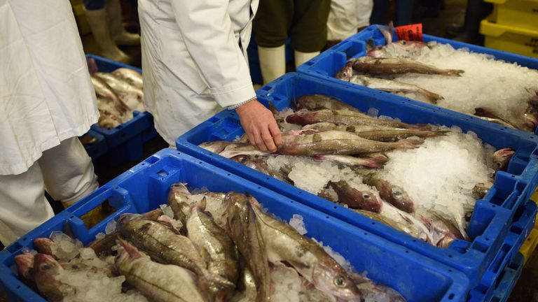 Buyers inspect boxes of fresh fish in Grimsby Fish Market