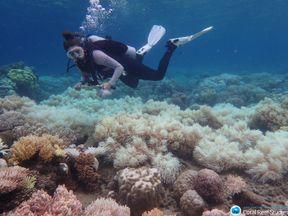Bleaching off Orpheus Island. Pic: Greg Torda
