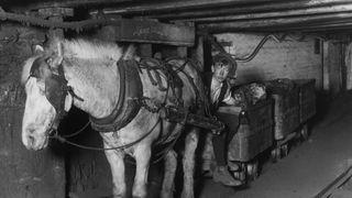 A pit horse