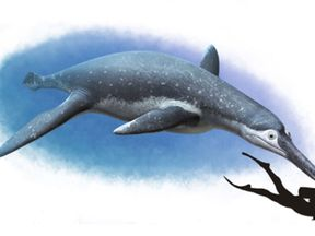 The new species was  top predator similar to a river dolphin but the size of a small bus