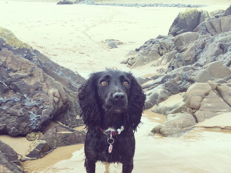 Pippa in happier times, before she caught fatal Alabama rot disease. Pic: Jessica Worthington