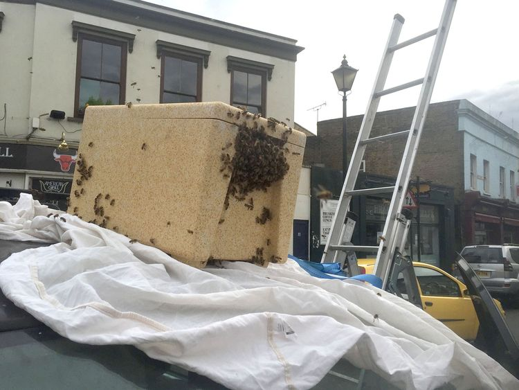 Beekeeper Phil Clarkson uses a portable hive to capture a swarm of bees at Greenwich Church Street