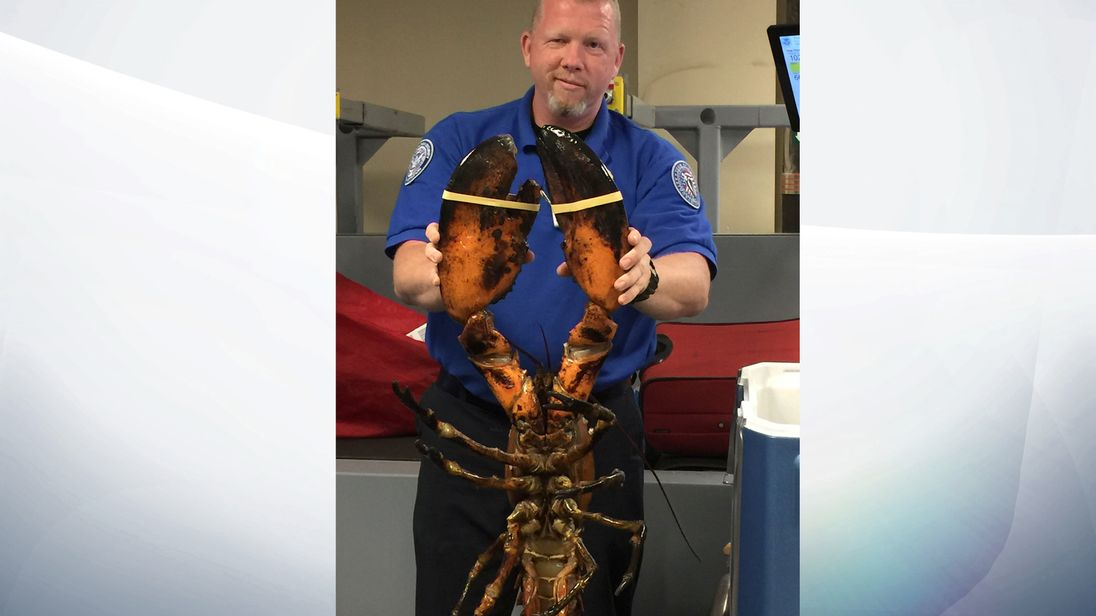 The lobster's owner was shell shocked when the photo emerged. Pic: TSA