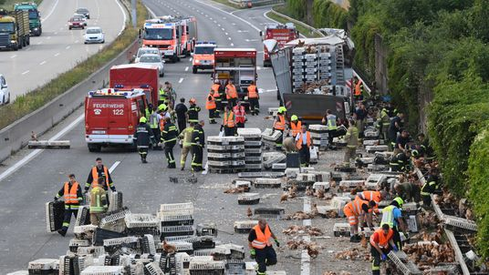 The truck was carrying 7,000 chickens when it crashed