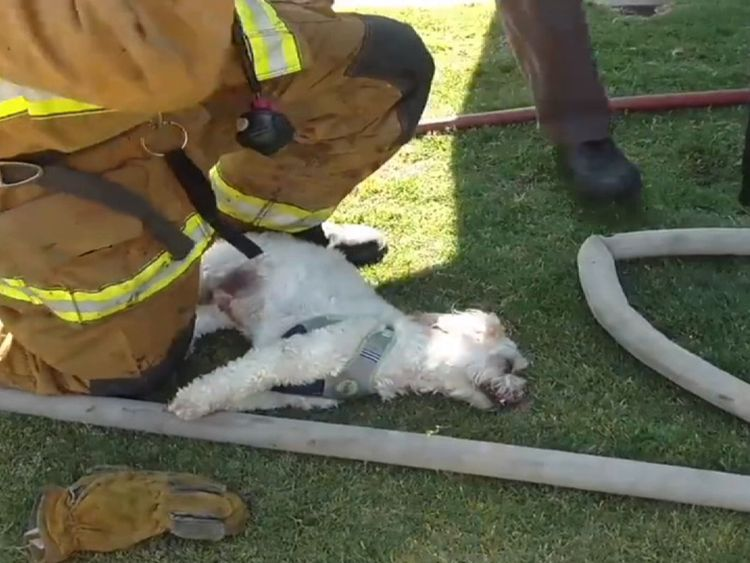 California firefighters revive unresponsive dog saved from house fire