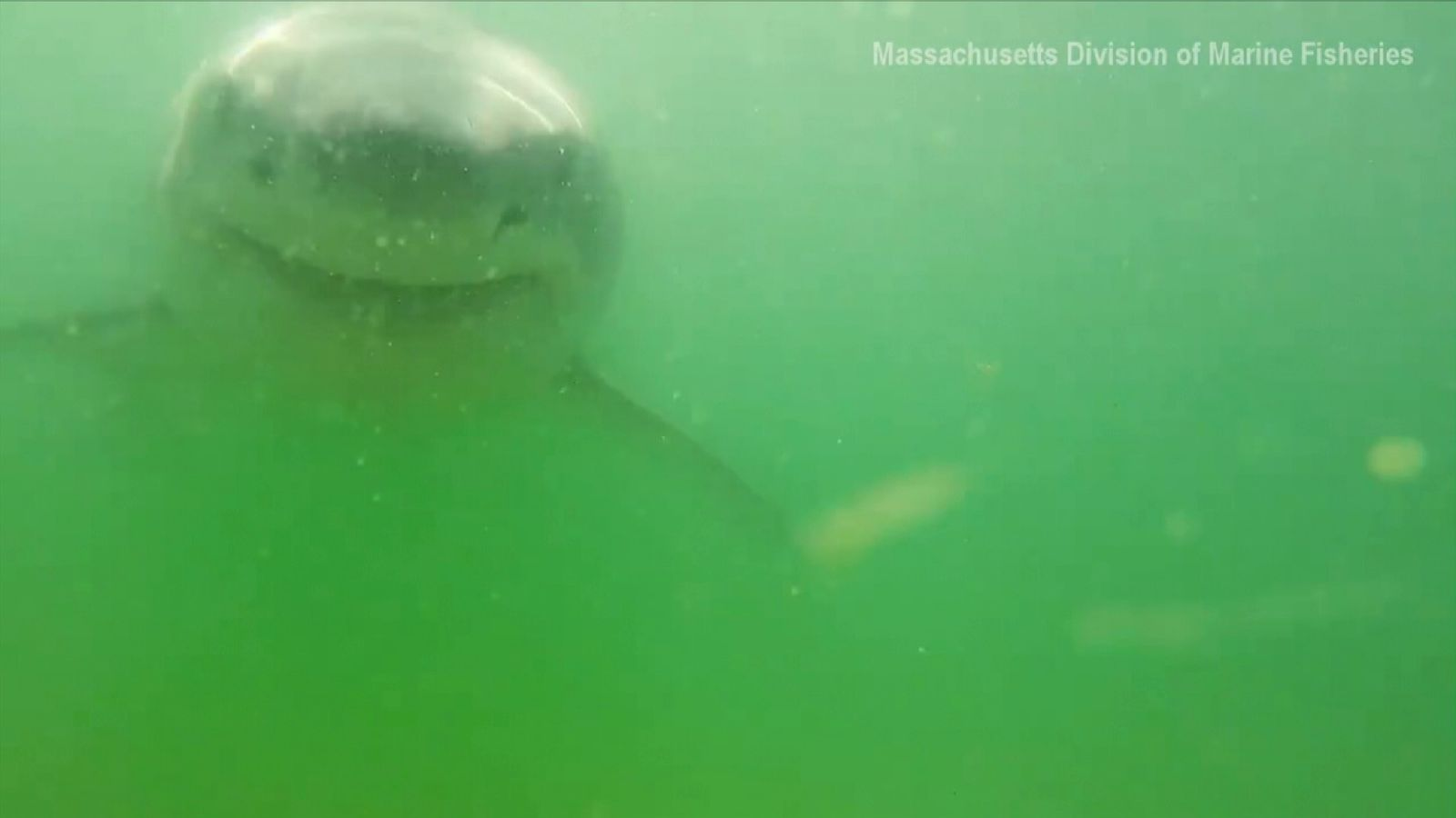 Camera survives Great White shark bite
