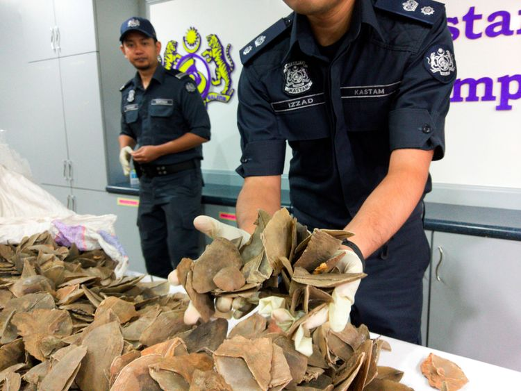 Malaysian authorities seize massive haul of illegally trafficked wildlife
