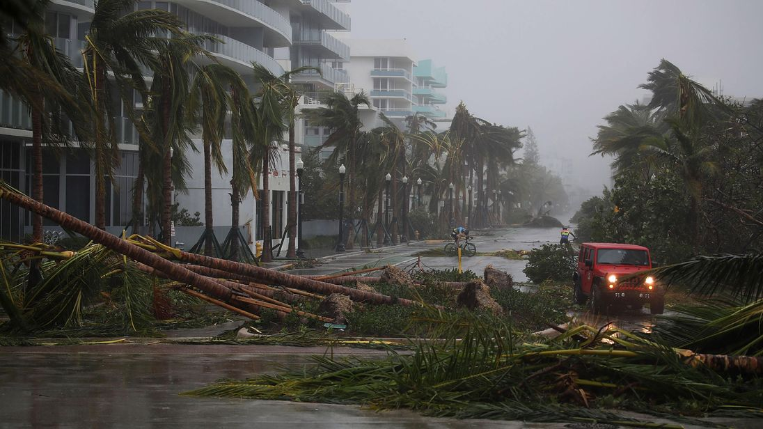 Palm trees are brought down by the wind in Miami Beach