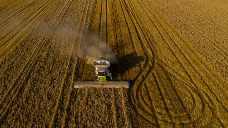 A combine harvests oats on August 23, 2019 in Hollingbourne, England.
