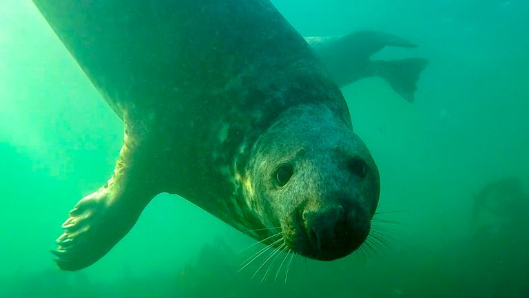 The seal was seen clapping its flippers underwater. Pic: Ben Burville