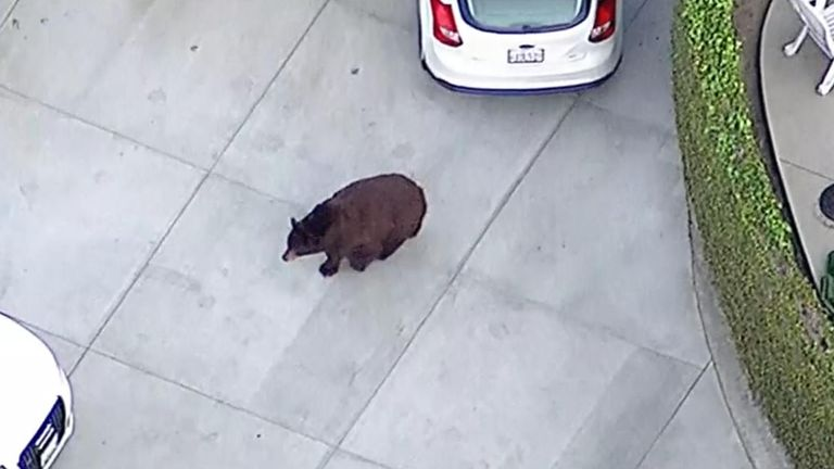 Officials say the bear has been taken to a nearby forest
