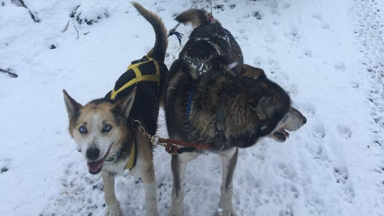 Cairngorm Sleddog Centres says it is closing down as climate change has turned snowy trails into mud baths