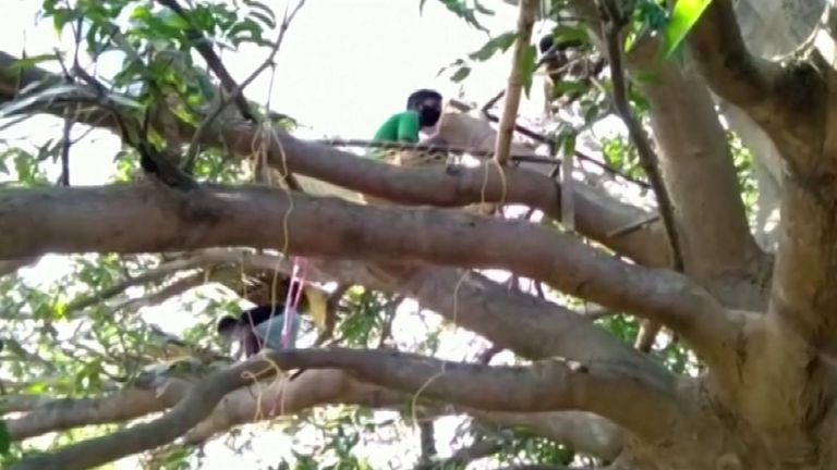 Lacking space at home, some villagers who are self-isolating have taken to the trees to keep their families and neighbours safe