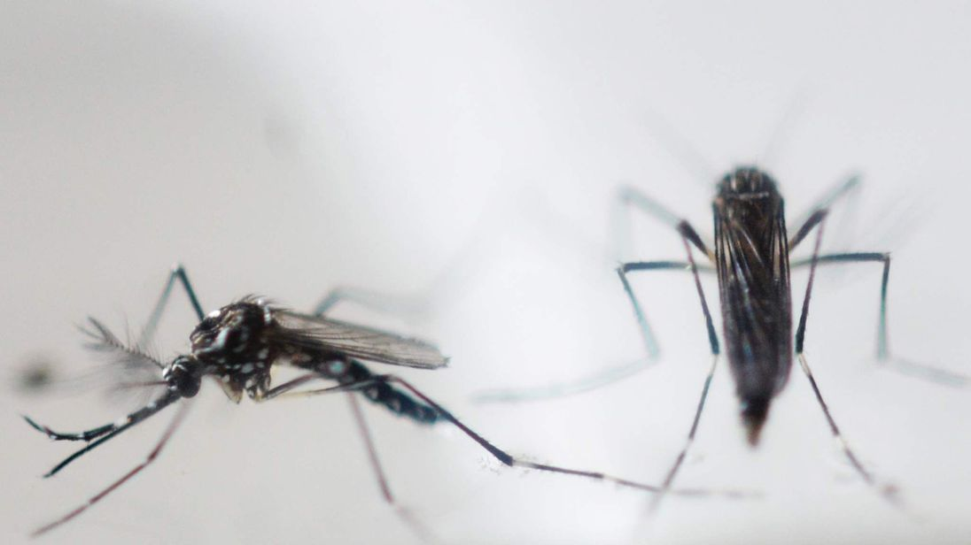 EL SALVADOR-HEALTH-ZIKA-VIRUS