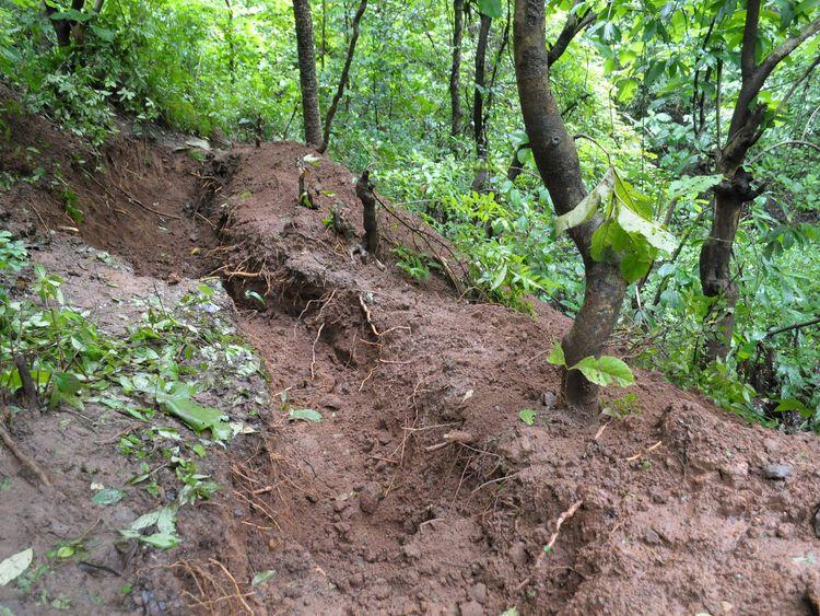 The woods where Sheena Bora's remains were found