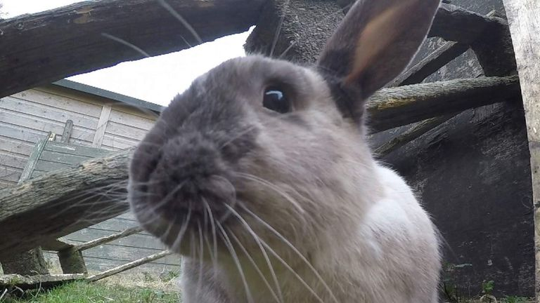 Four in five rabbits bought during Easter are given up or die of neglect