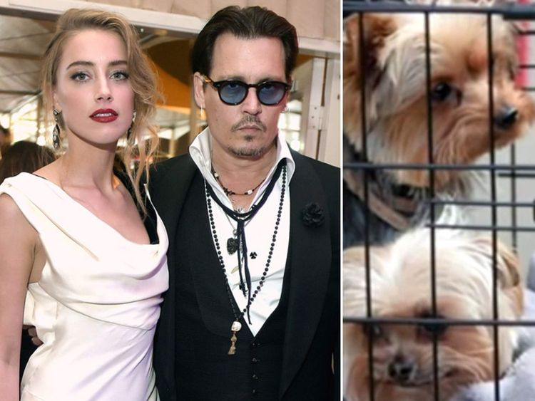 Johnny Depp's dogs