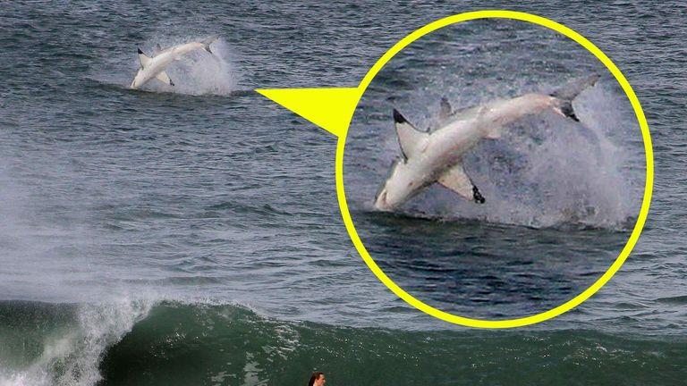 Giant Shark Causes A Splash For Surfer | World News | Sky News