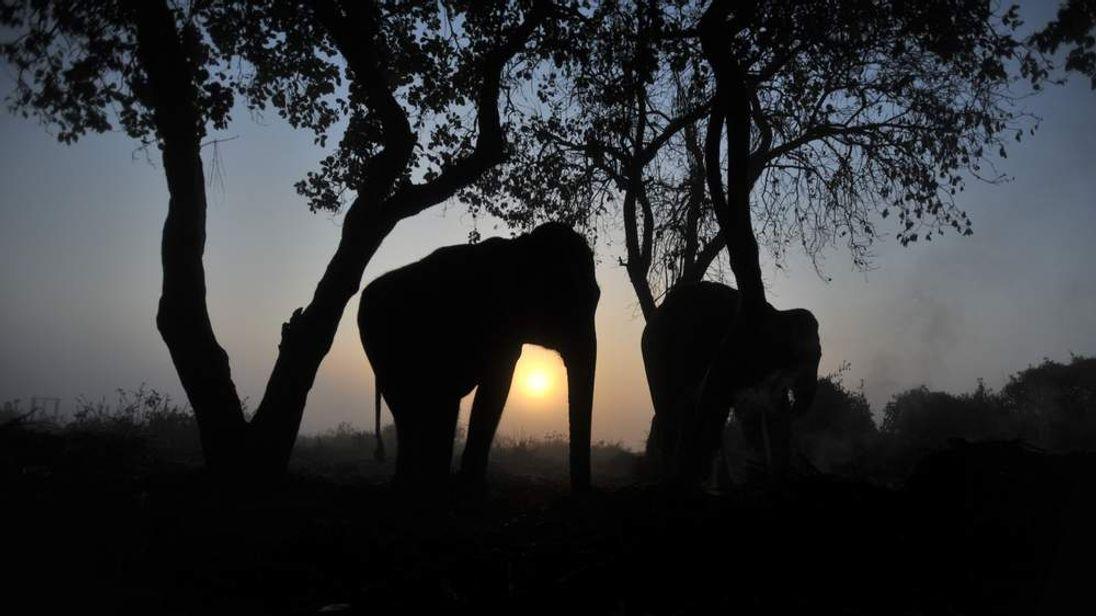 An elephant in Nepal