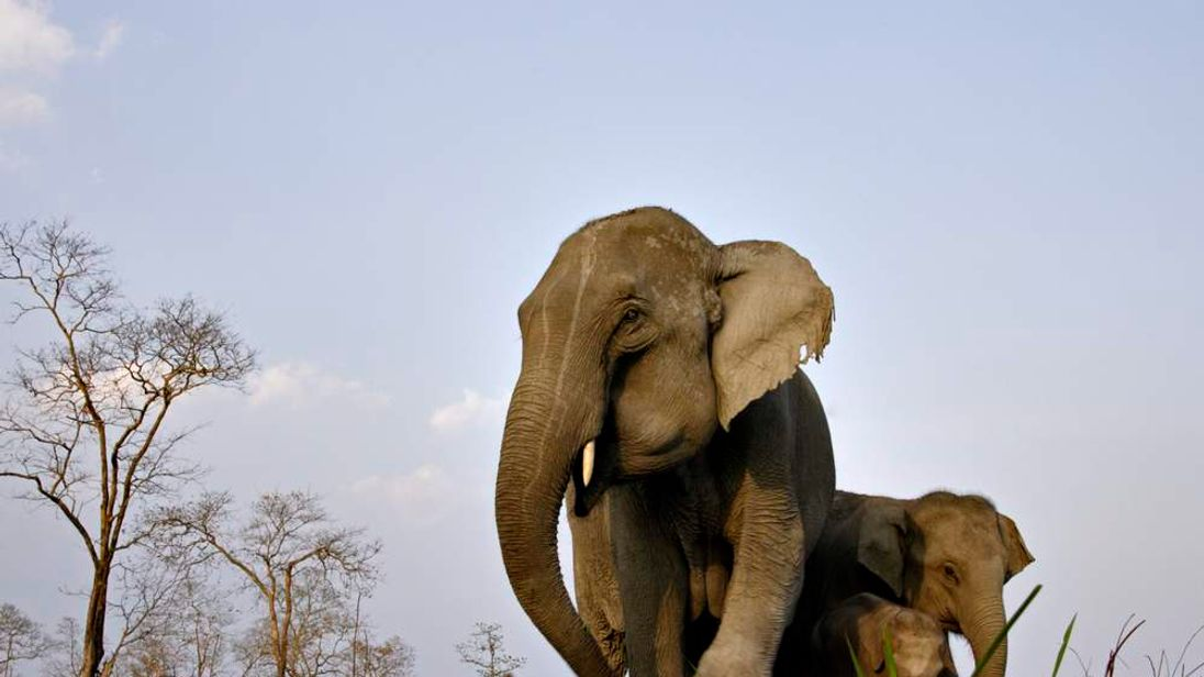 An Asiatic elephant family in India