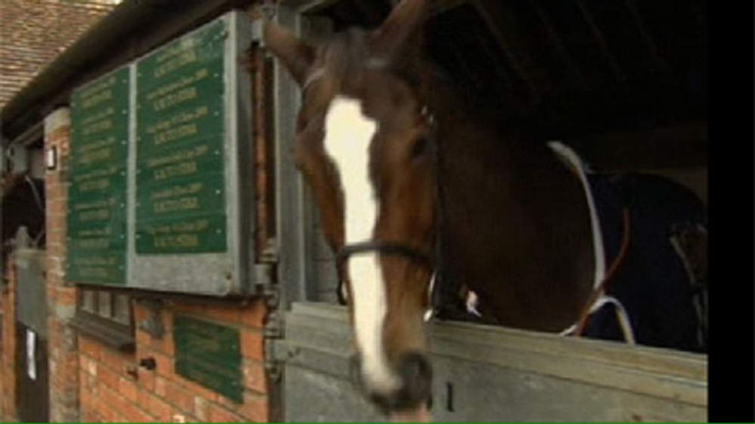 Race horse Kauto Star in his stable