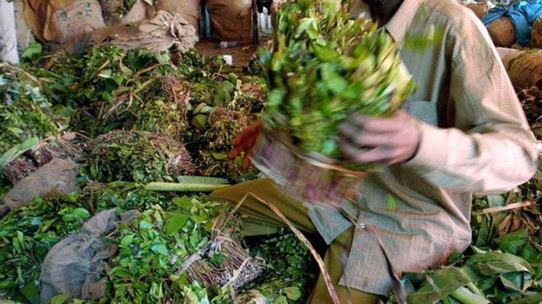 File Photo: A khat dealer handles the amphetamine-like stimulant in Africa