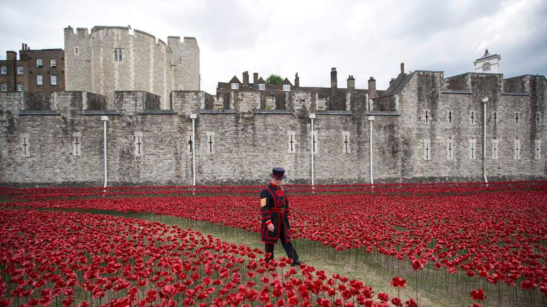 Ceramic Poppies At Tower Of London