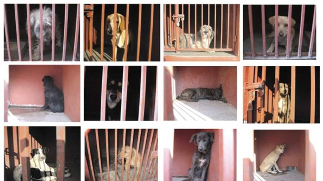 Twelve of the dogs rounded-up by officials