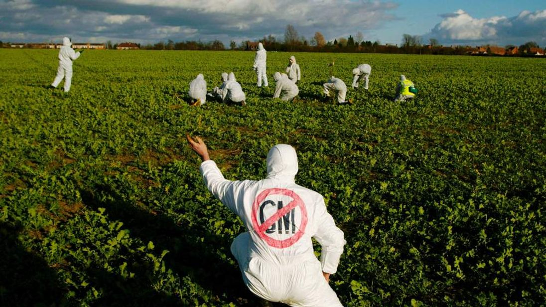 Anti-GM Crop Protest in Long Marsden, England