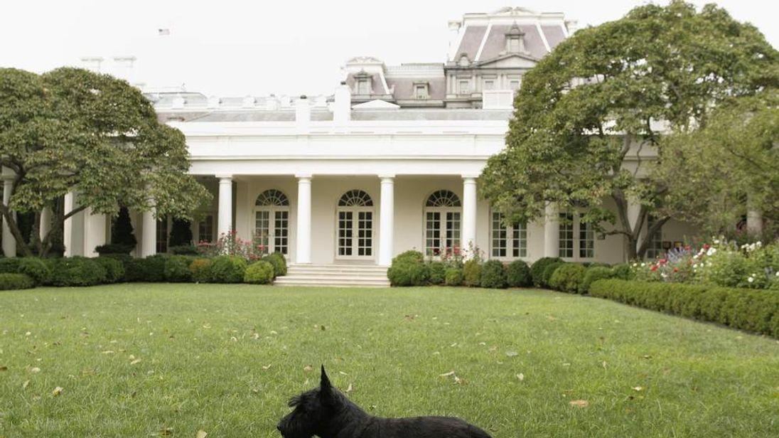 Barney strolls the White House Rose Garden in 2007