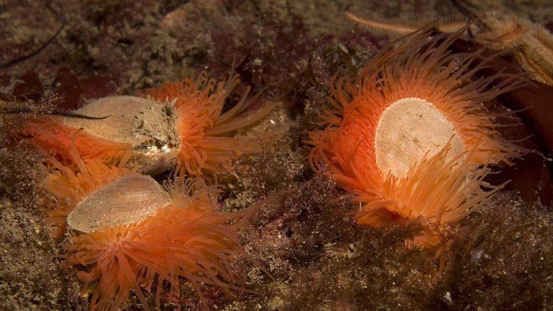 Shellfish reef discovery