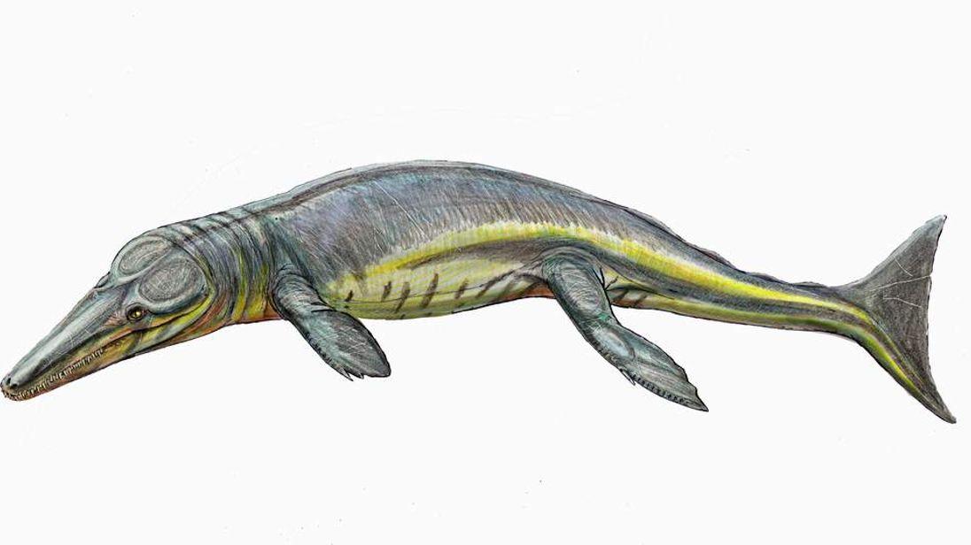 Tyrannoneustus lythrodectikos