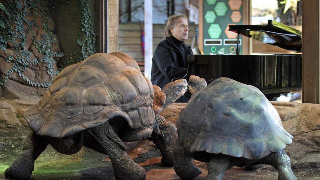 Clayderman plays to tortoises