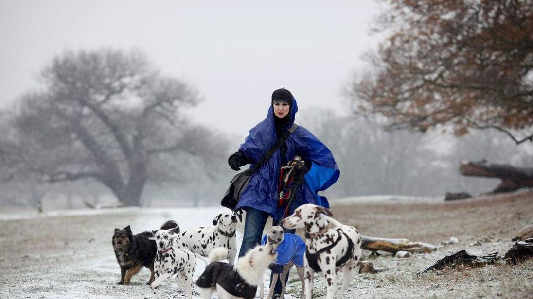 A woman walking her dog in Richmond Park